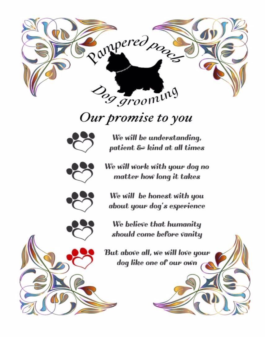 pampered pooch dog grooming promice