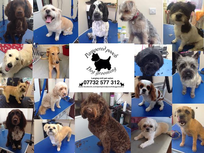 pampered pooch dog grooming de75 7hx