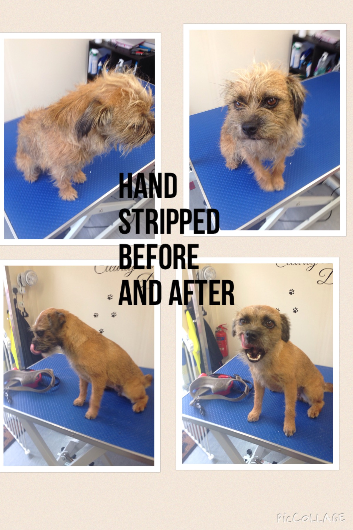 Pampered Pooch Dog Grooming